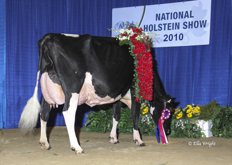 Grand Champion Royal '10: Winterbay Goldwyn Lotto EX-95-USA 5E