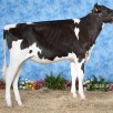Dijs Line *PO  |  As maiden heifer