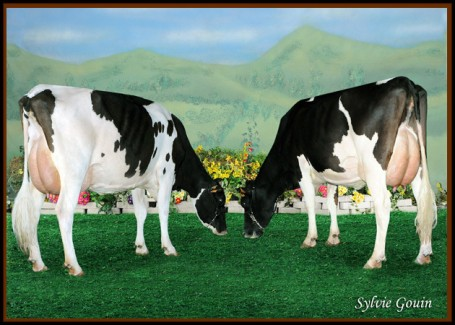 Left: Mantono Laurin Gygy VG-85-ES 2yr. Right: Her full sister Gina