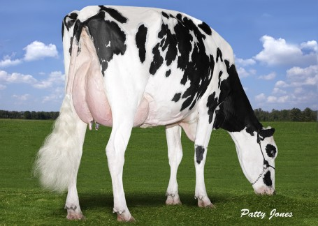 Pine-Shelter Claire Wood VG-87-2YR-CAN