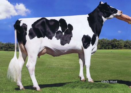Leaderwin Observr Mary VG-88-USA 2yr. | Full sister to dam