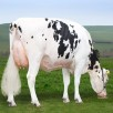Bouw Snowman Carry VG-85-UK 2yr.