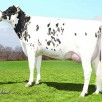 Wabash-Way Emilyann VG-88-USA 2yr.
