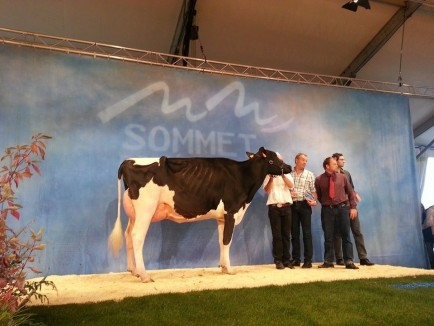 Dijs Lauria - Grand Champion Du Sommet 2014