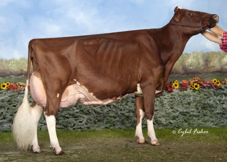 KHW Regiment Apple-Red-ET EX-96 DOM