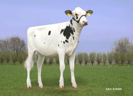Capnation Sosecret P Colt *RC *P | As maiden heifer