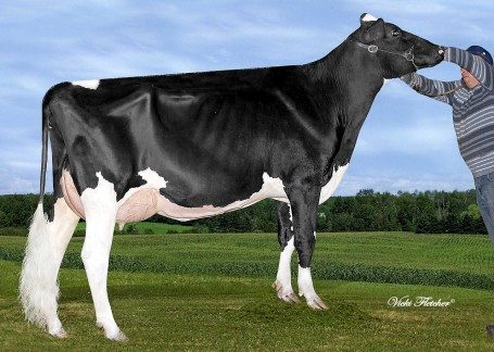 Misty Springs MOM Brenna *RC VG-86-CAN 2yr.