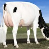 2. Dam: Des-Y-Gen Planet Silk *RC EX-90-USA EX-92-MS