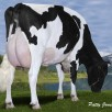 3. Dam: Gen-I-Beq Goldwyn Secret *RC VG-87-CAN 2yr.