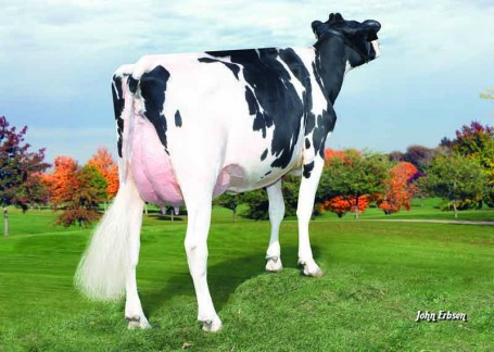 Farnear-TBR Aset Absolute VG-87-USA
