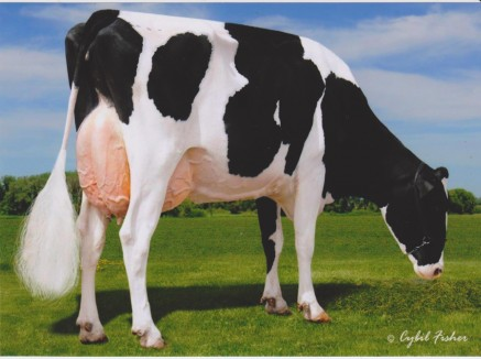 Rosedale Crown of Thorns *RC EX-91 2E