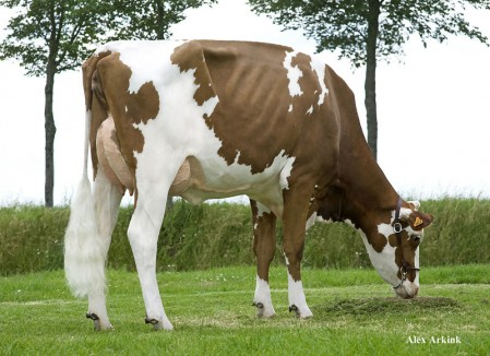 Dam: BTS-Avea Red VG-87-NL 2yr.  |  Picture @ 2 month fresh
