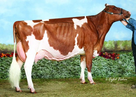 Jen-D Talent Raeanna-Red EX-93 2E