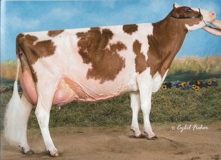 Dam: RSC-CH Advent Rene-Red-ET EX-93 2E
