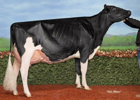 Robella Goldwyn Edgeley VG-88-CAN