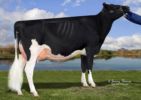 Ms Absolute Bliss VG-88-2YR