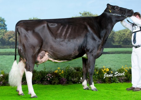 Logan Alexander Belle VG-89-UK 3yr.