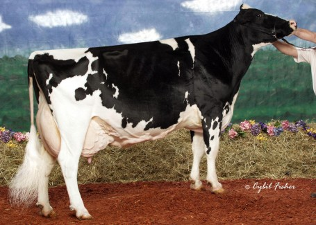 Shoremar S Alicia EX-97 3E