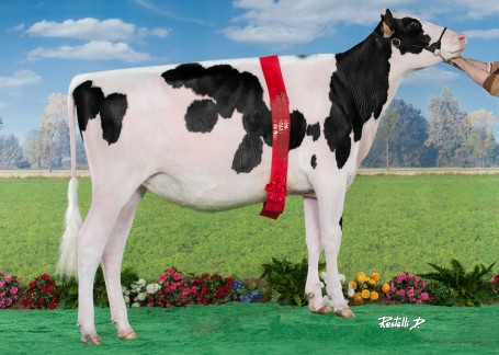 Roccafarm Wi Zaninda | As maiden heifer