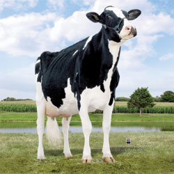 Same family: Indianhead Kite Brienne *RC EX-94-USA