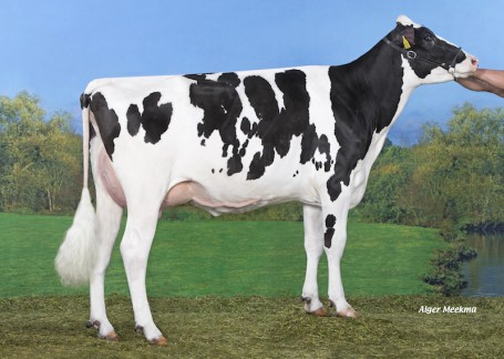 Koepon Mcc Esmonique 5 VG-85-NL 2yr.