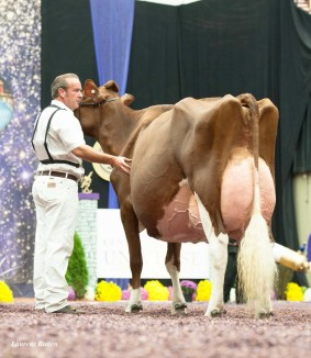 KHW Regiment Apple EX-95-USA  | Res. Grand Champion WDE '13