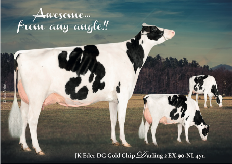 JK Eder DG Gold Chip Darling 2 EX-90-NL 4yr.  |  Awesome from any angle!!