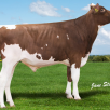 Maternal brother to dam: Apple Pie Red @ AI Total