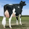 Full sister to Arianna: BVK Atwood Abrianna EX-94-USA 4yr.
