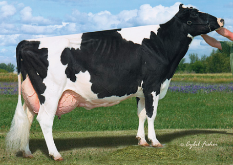 Full sister to 3rd dam: Penlow Georgette Outside EX-96-CAN 2E