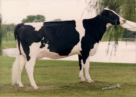 Quietcove Titan Flurry EX-93