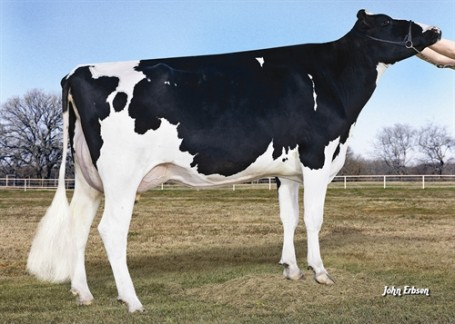 Morningview Freddie Mimi EX-90-USA