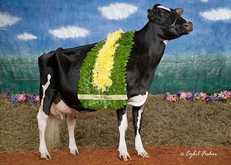 Savage-Leigh Licorice EX-92-USA | Same family