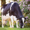 Grand dam: Luck-E Advent Atlanta *RC EX-94-USA 2E