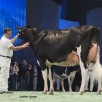 Galys-Vray | Res. Grand Champion Swiss Expo 2015