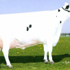 Gold-N-Oaks Morty Malibu-ET EX-94-USA 2E