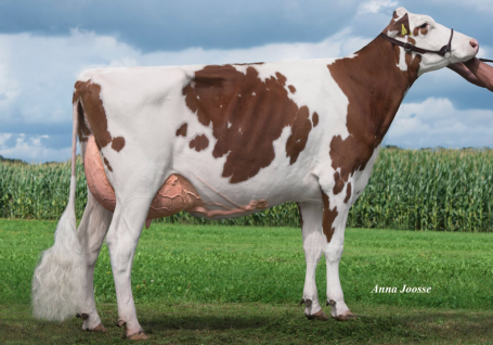 KOE Fabiola-Red EX-90-NL EX-91-MS 4yr.