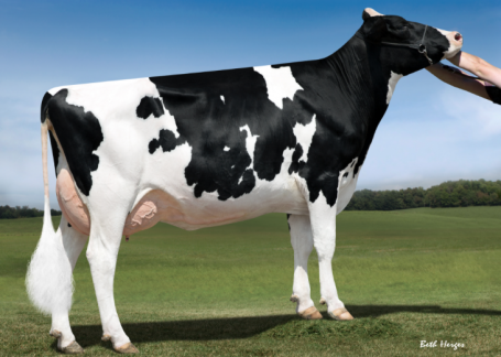 Cookiecutter Supersire Have VG-86-USA