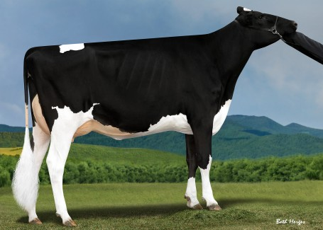 Endco Diamond Beauty VG-86-2YR