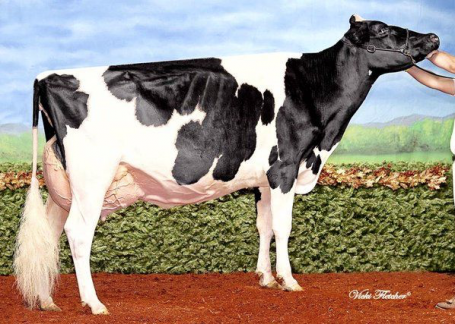 Grand dam: Kingsway Sanchez Arangatang EX-95-CAN