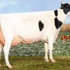 Same family: Kingsway Sanchez Armadillo EX-95-CAN