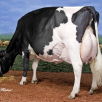 4th dam: Kingsway Terrason Allie EX-95-CAN