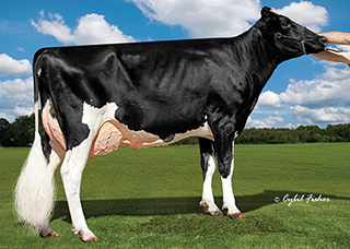Cookiecutter Ssire Has VG-88 EX-MS DOM