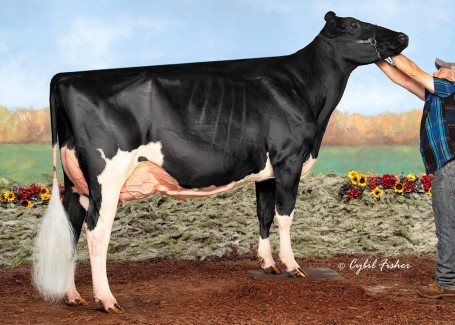 Savage-Leigh Gold Lala VG-88