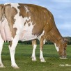 Islehaven Gold Dancer VG-88-CAN 4yr. | Full sister to dam