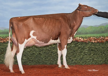 Maternal sister to dam: Miss Hot Mama-Red EX-92-USA