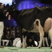Same family: Hellender Goldwyn Glinnia EX-93-CH | Best Udder & Res. Grand Swiss Expo '17