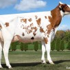 Dam: Milksource D Devils Red EX-90-USA