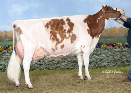 Grand dam: Budjon-Nitzy Destiny-Red EX-94 2E