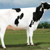 Dam: Al-Lew Monterey Ashley 1346 VG-89-USA EX-MS La1.